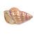 Pale Pink/ Purple Enamel Sea Shell Brooch In Gold Tone Metal - 35mm Across