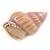 Pale Pink/ Purple Enamel Sea Shell Brooch In Gold Tone Metal - 35mm Across - view 2